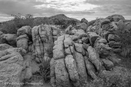 Mohave bw #9