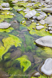 River Moss #13