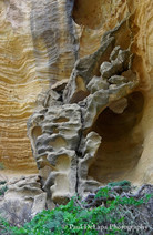Lobo Canyon #21