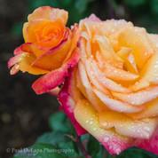 Flowers #10