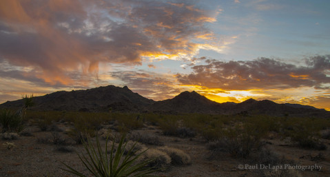 Mohave Desert #15