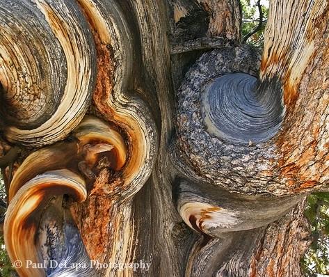 Wood #9