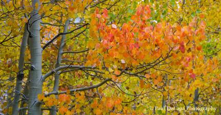 Autumn #7
