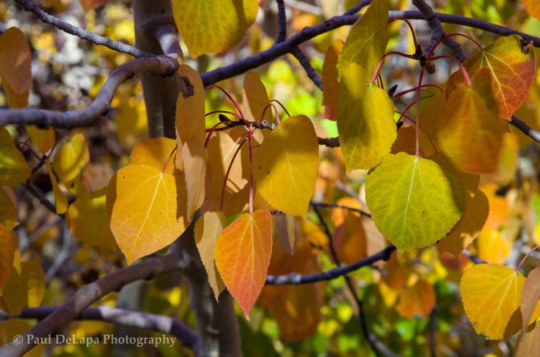 Autumn #10