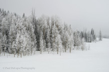 Winter #16
