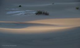 Mesquite Dunes #11