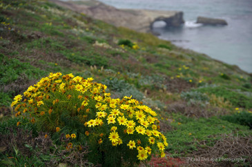 Santa Rosa Island #15