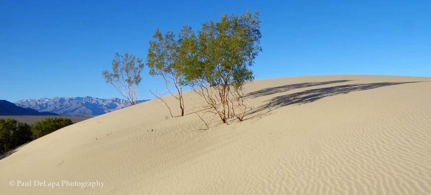 Mesquite Dunes #12