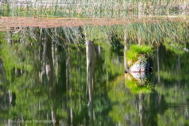 Olaine Lake #8