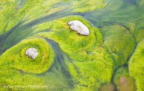 River Moss #2
