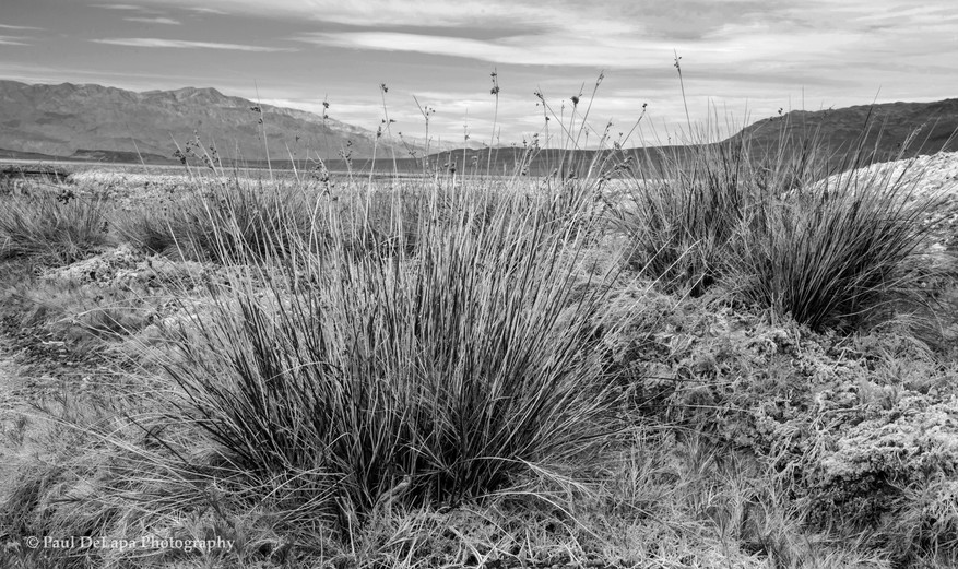 Death Valley bw #11