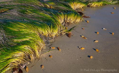 Bates Beach #5