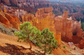 Bryce Canyon #12
