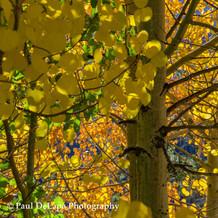 Autumn #14