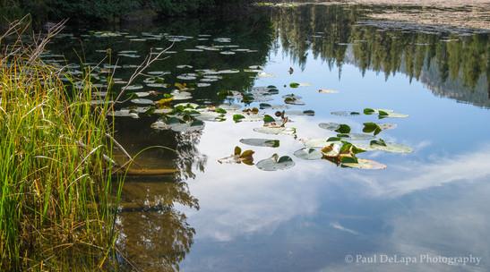 Olaine Lake #4