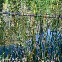 Olaine Lake #2