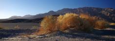 Death Valley #9