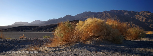 Death Valley #9