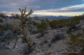 Mohave Desert #4