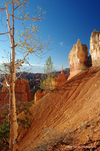 Bryce Canyon #8