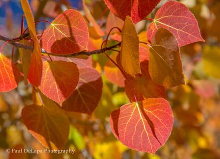 Autumn #15