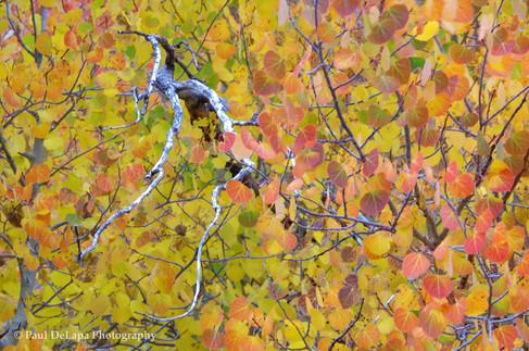 Autumn #13
