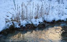 Zion Winter #22