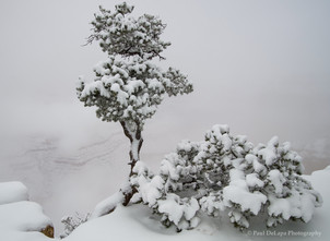 Grand Snow-Canyon #19