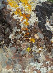 Lichen #15