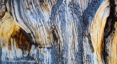 Wood #7