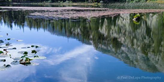 Olaine Lake #5