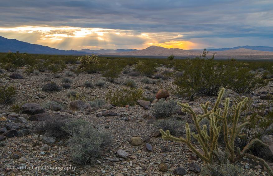 Mohave Desert #18