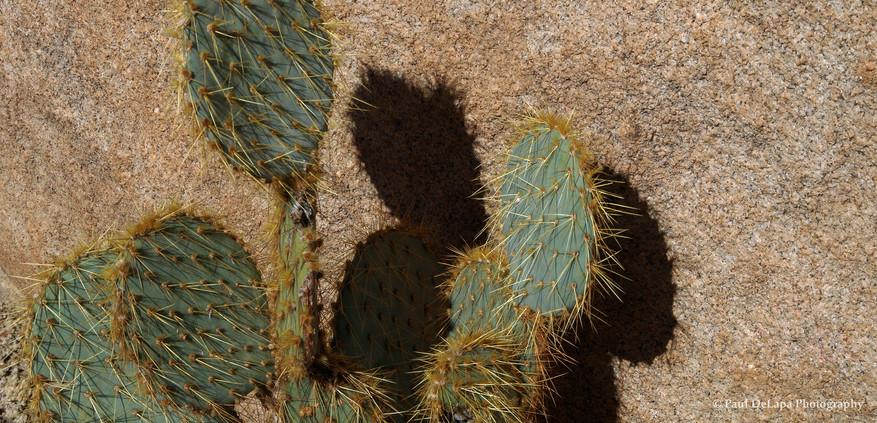 Cactus #17