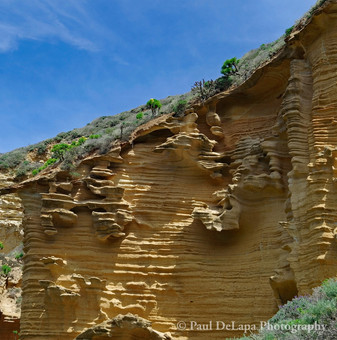 Lobo Canyon #12