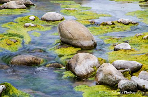 River Moss #8