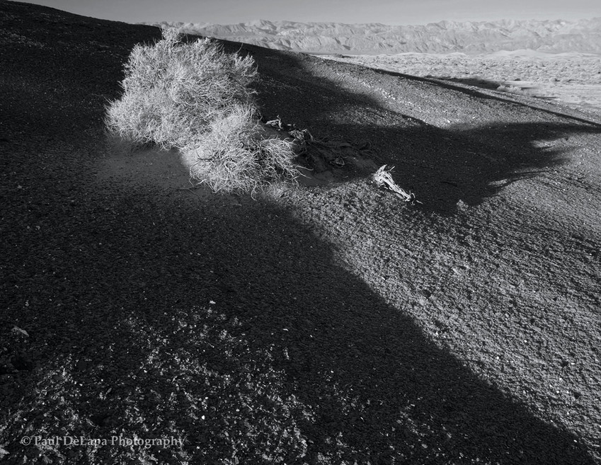 Death Valley bw #17