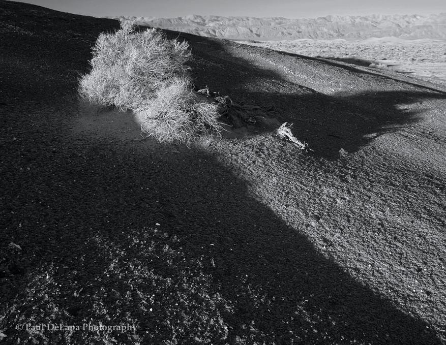 Death Valley bw #17