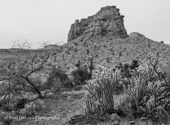 Mohave bw #7