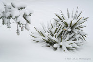 Snow #7