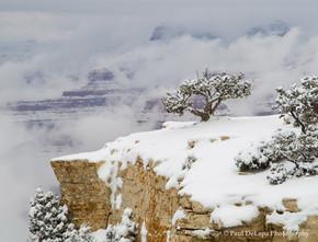 Grand Snow-Canyon #18