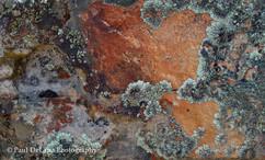 Lichen #8