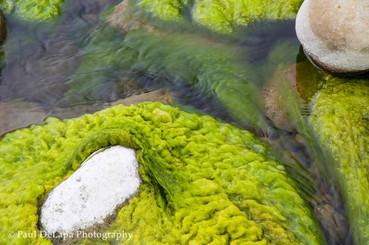 River Moss #6