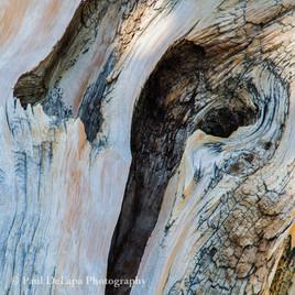 Wood #1