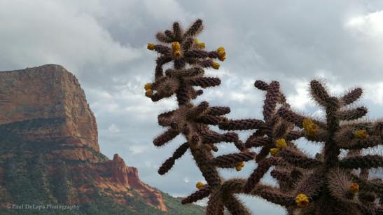 Northern Arizona #4