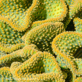 Cactus #8