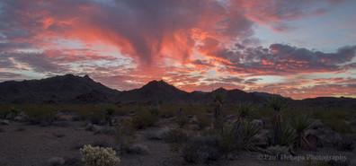 Mohave Desert #9