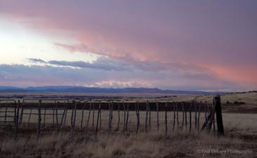Northern Arizona #6