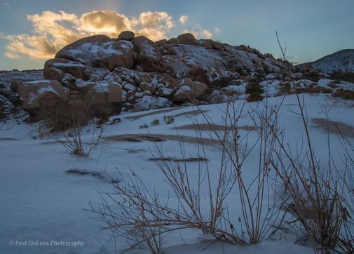 Joshua Snow-Tree #12
