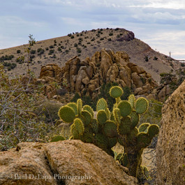 Cactus #6