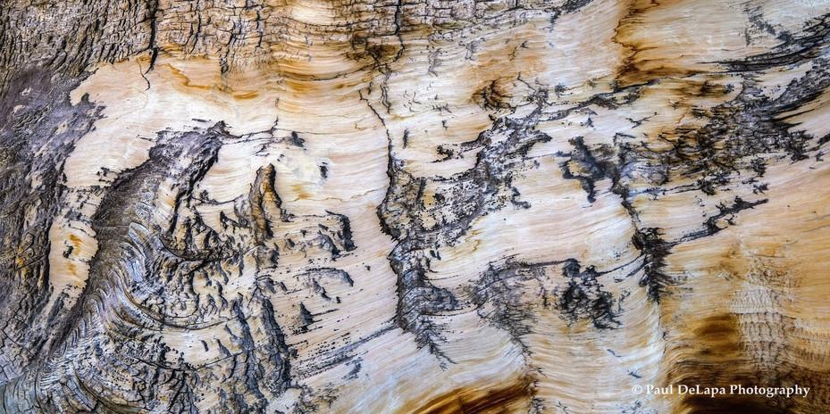 Wood #16